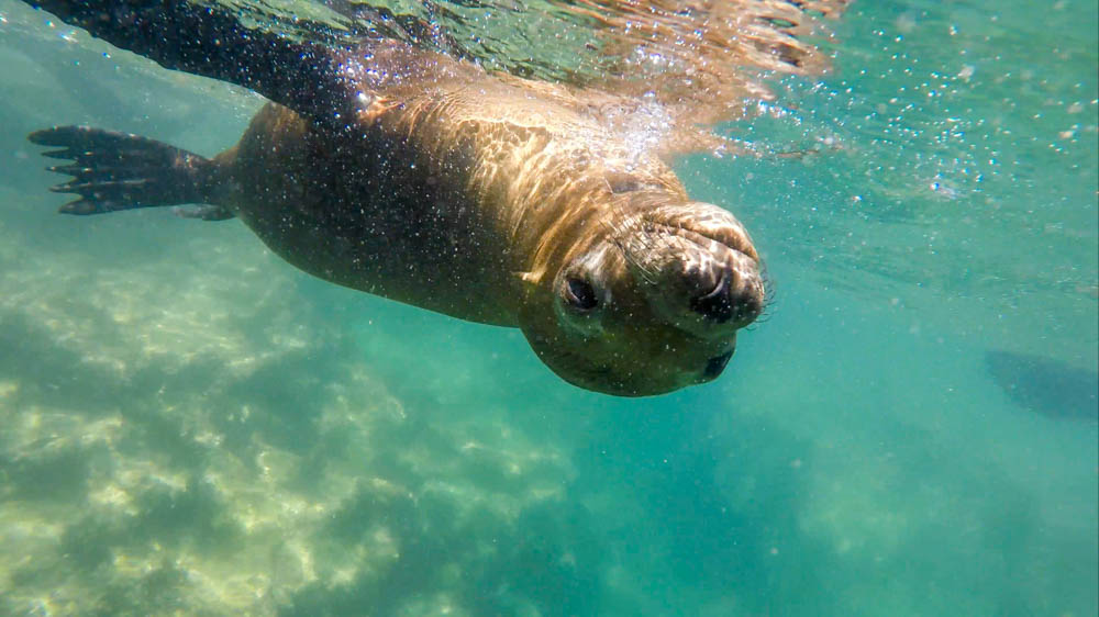 Swimming in Pacific Ocean with sea lions on a Soul Nourish retreat | 2TPHOTO